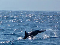 Whale and Dolphin spotting, Cagayan Valley, Philippines