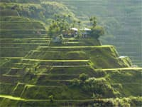 Philippines Rice Terraces Tour