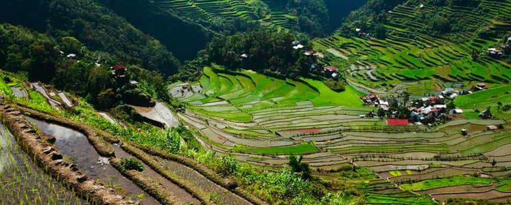 the Rice Terraces, Philippines