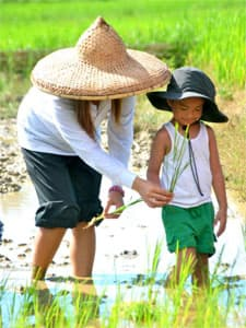 Child planting rice, Motag Living Museum, Philippines